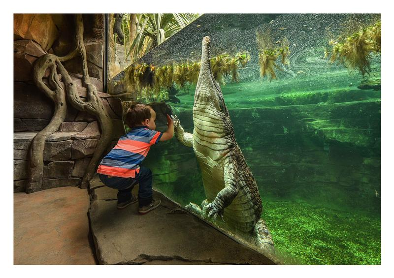 At Monsoon Forest - Boy and crocodile (c) Chester Zoo